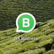 whatsapp business activeren